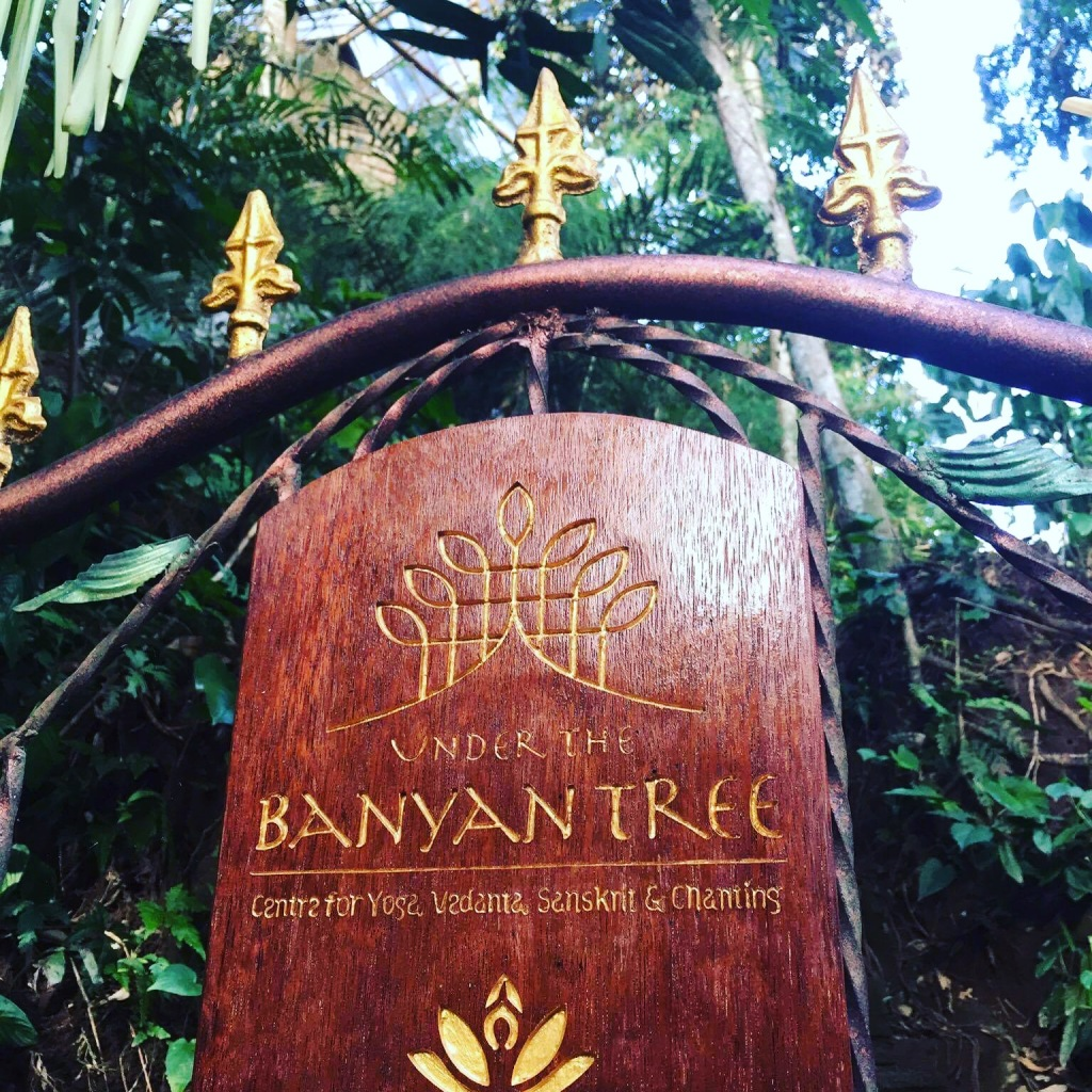 Under the banyan tree